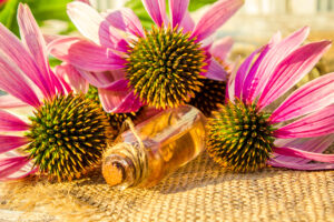 Medicinal herbs echinacea in a small bottle